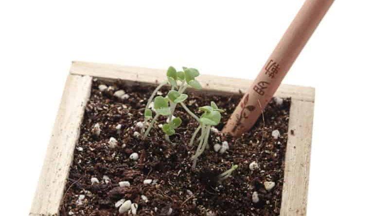 Карандаши, которые можно превратить в растения