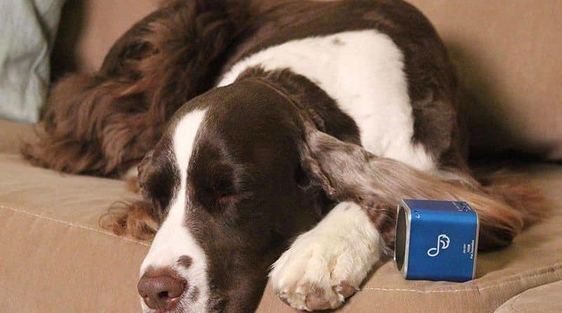 Беспроводная колонка для собак Pet Tunes